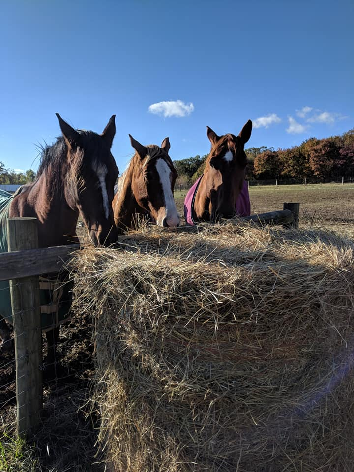 We Love Our Hay